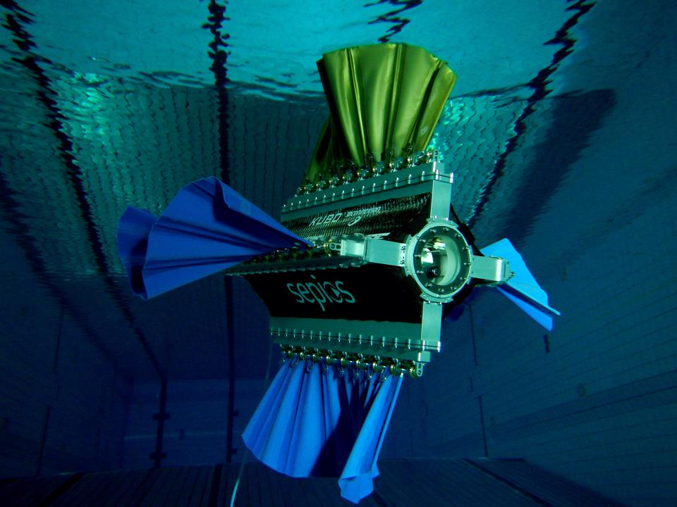 Sepios diving in swimming pool with all four fins attached